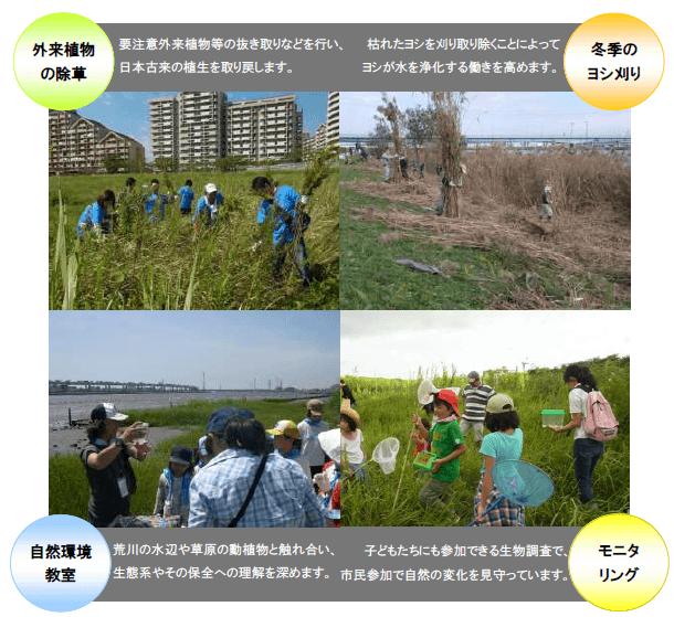外来植物の除草:要注意外来植物等の抜き取りなどを行い、日本古来の植生を取り戻します。 冬季のヨシ刈り:枯れたヨシを刈り取り除くことによってヨシが水を浄化する働きを高めます。 自然環境教室:荒川の水辺や草原の動植物と触れ合い生態系やその保全への理解を深めます。 モニタリング:子ども達にも参加できる生物調査で市民参加で自然の変化を見守っています。